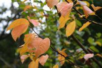 川村記念美術館の紅葉