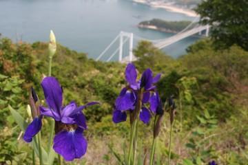 カレイ山展望台から見た大島大橋