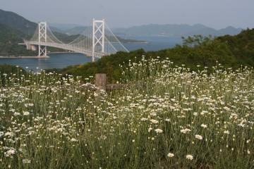 フラワーライン展望台から見た因島大橋